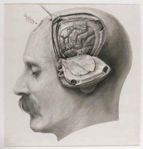 harvey_cushing_drawing_brain
