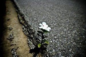 resiliencia2