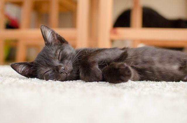 gato soñando