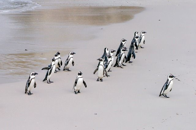 Tipos de liderazgo de Goleman Pingüinos