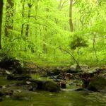 Comprobado: el sonido de la naturaleza nos ayuda a relajarnos