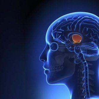 Tálamo en cerebro