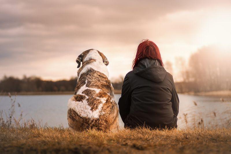 beneficios de las mascotas 2