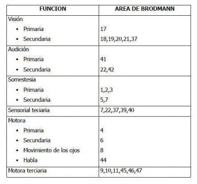 funciones-brodmann