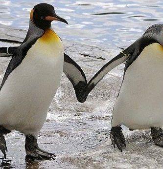 Pingüinos homosexualidad
