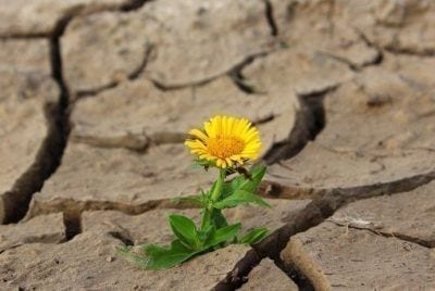 Adversidades de resiliencia